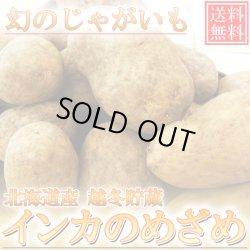 画像1: 【送料無料】北海道産越冬幻のじゃがいも 『インカのめざめ』 5kg