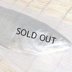 画像1: 【送料無料】オホーツク海枝幸産 新巻鮭 2.5kg/秋鮭 新物